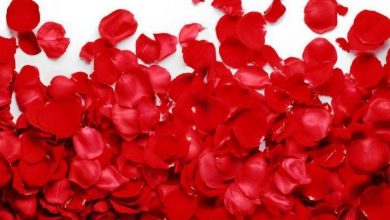 valentine blast and laore girdopesh.com