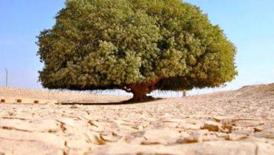 tree mecca